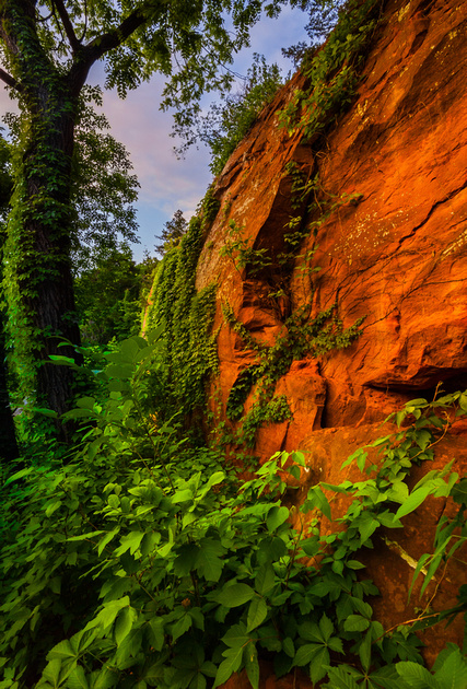Spring In The Canyon II